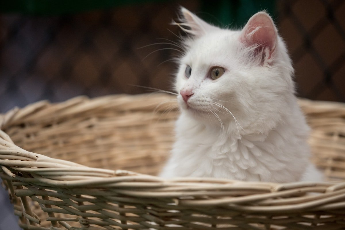 Here's What It Means If You Have A Lot Of Dreams About Cats