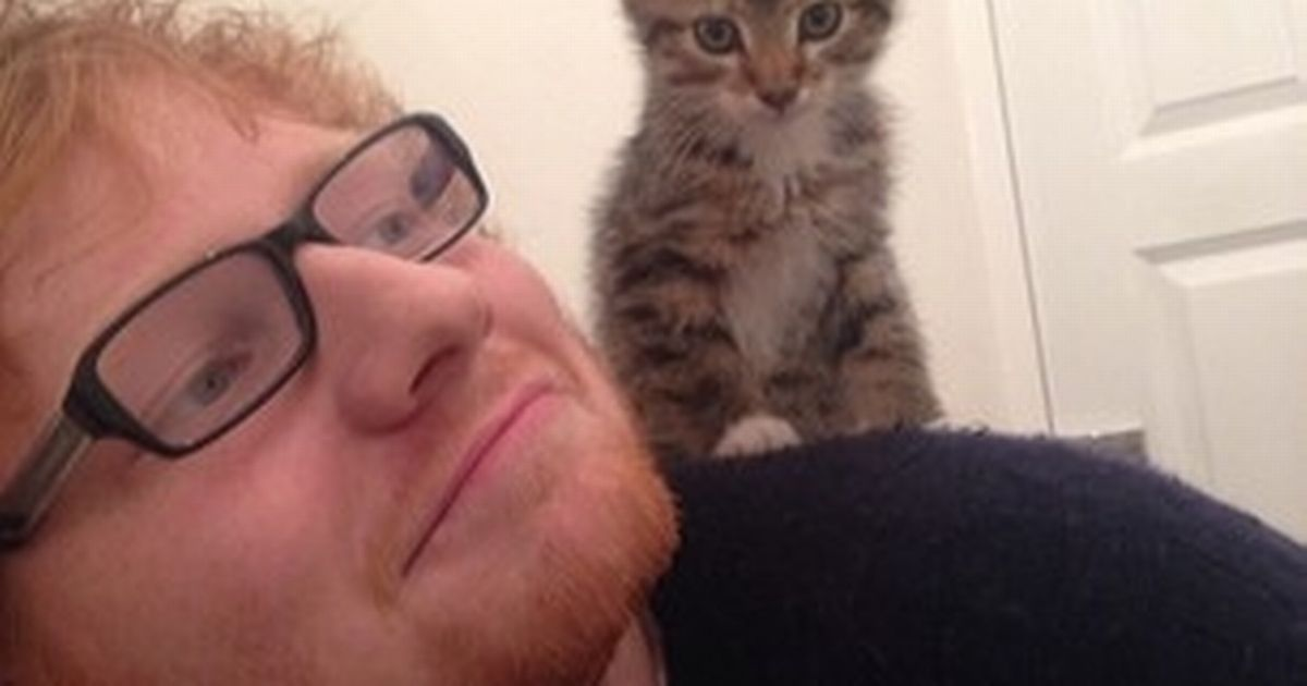 Celeb cat owners like Ed Sheeran are seen as 'less masculine 'than men with dogs