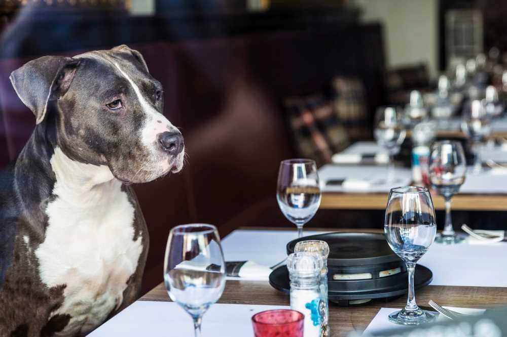 Dog has very specific demands for burger from NYC restaurant