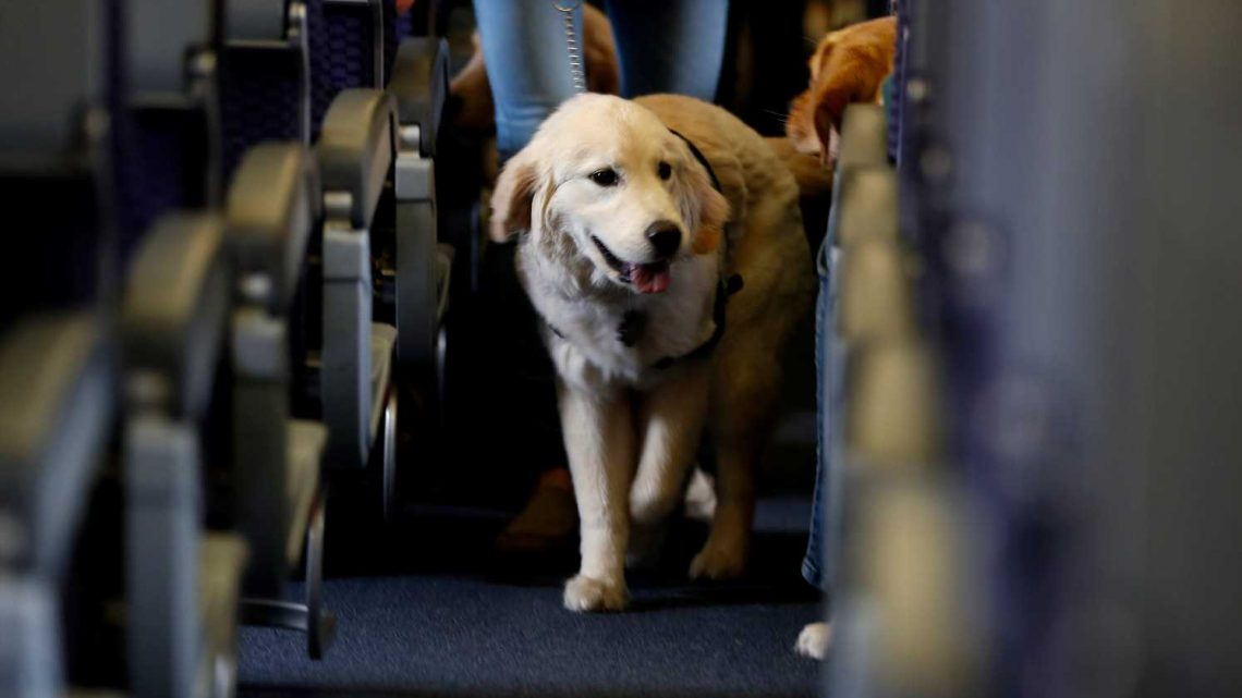 Ask the Captain: What can be done for passengers who are allergic to animal dander?