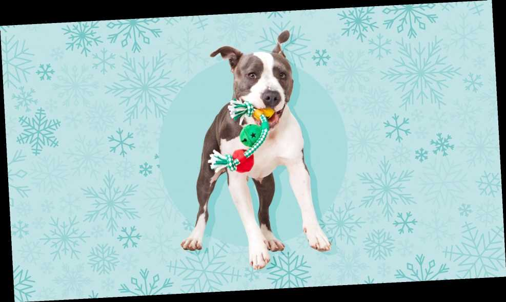 All the Gifts Your Dog Definitely Needs This Holiday Season