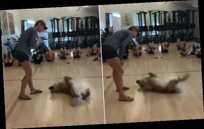 Video shows Retriever pup joining into the workout at a fitness class