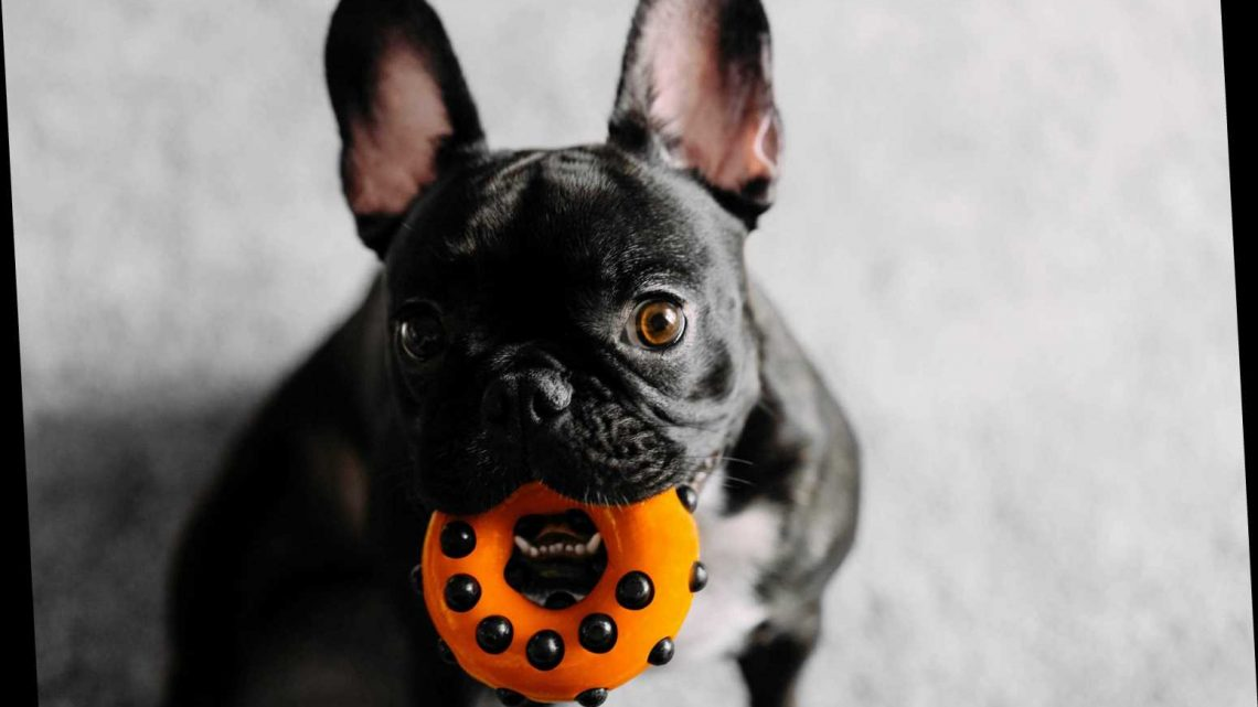 10 X-Rated Dog Toys That Look Uncomfortably Similar To Sex Toys