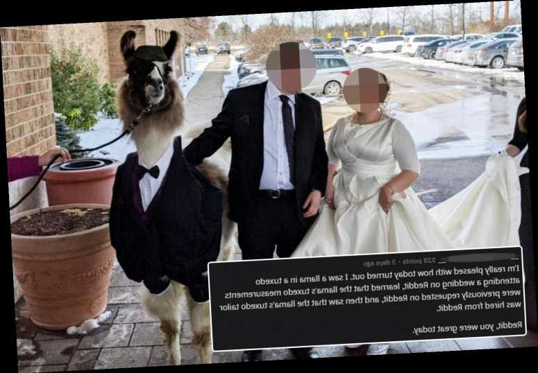 Man brings a Llama as his plus one to his sister's wedding and her reaction is priceless