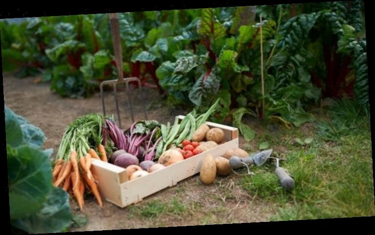 Grow your own: How to grow fruit and veg – the 20 quickest fruit and veg to grow