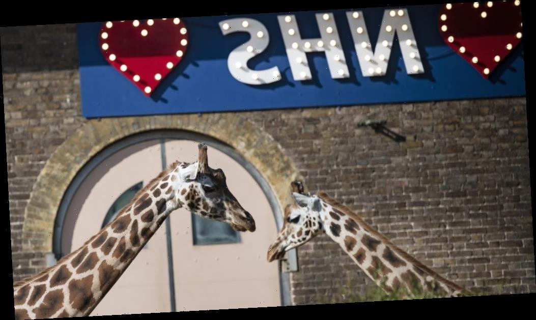 ITV Series To Go Inside London Zoo During Coronavirus Lockdown