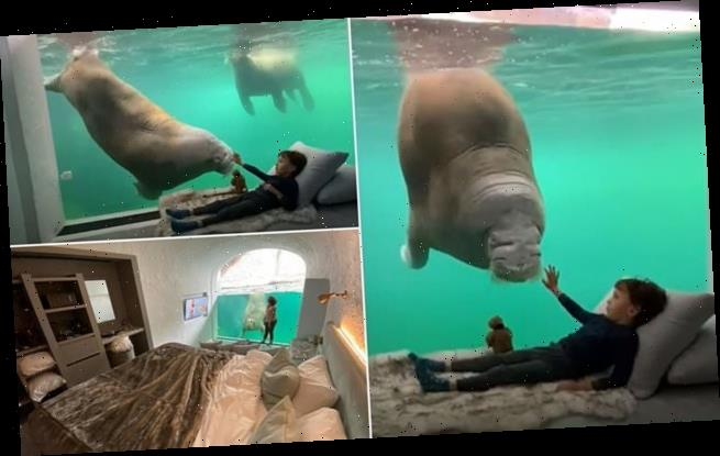 Belgian zoo opens suite with views into a walrus tank