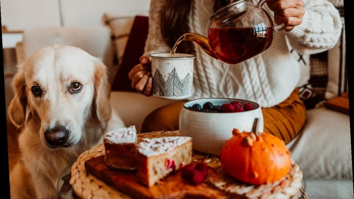 32 Instagram Captions For Pumpkin Spice Cake & Your Tea Party Snacks
