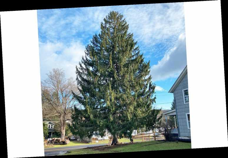 The 2020 Rockefeller Center Christmas Tree Is Heading to NYC! See the 75-Foot Spruce