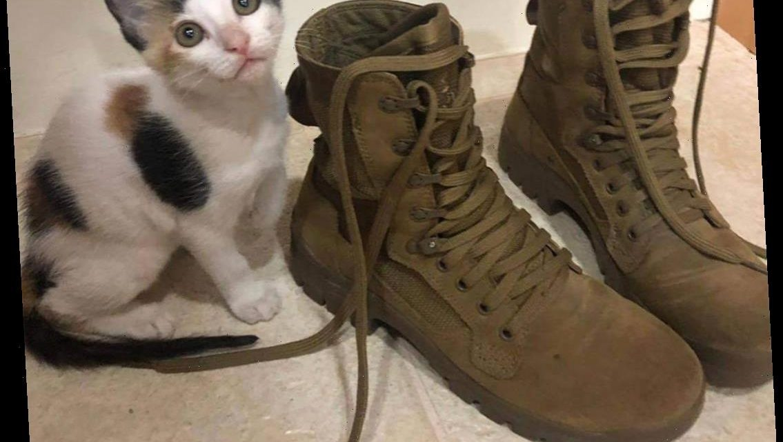 Army Soldier Helped Through Difficult Deployment by Rescue Kitten Working to Bring Cat to U.S.