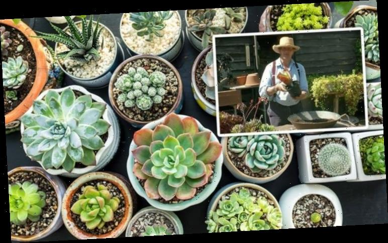 Monty Don: Gardening expert urges gardeners to be 'careful' of common household succulent