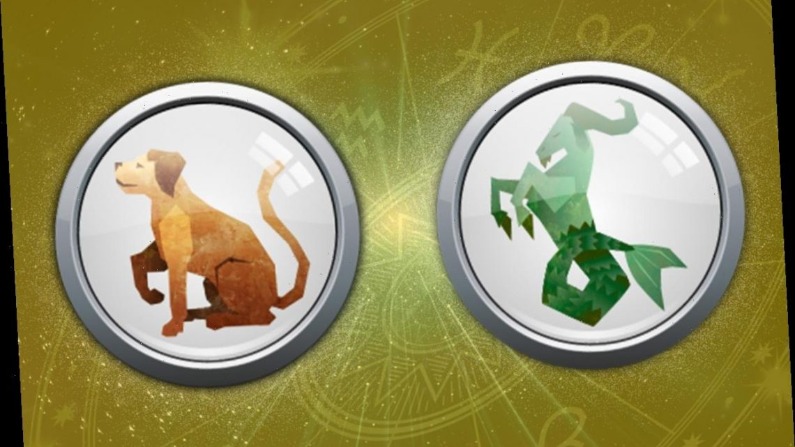 Capricorn Dog Monthly horoscope: What your Chinese and Western zodiac sign has in store for you