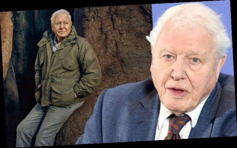 David Attenborough: A Perfect Planet host has only left home twice in nine months