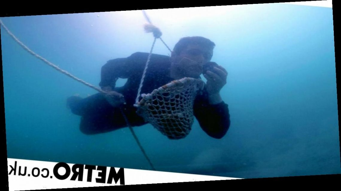 I'm a pearl diver – this is what it involves