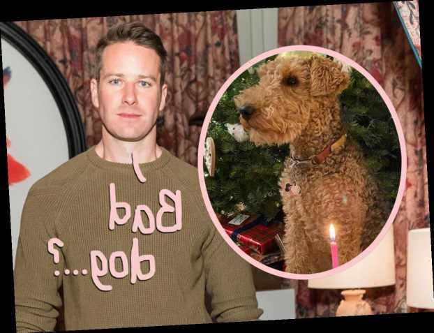 HUH?? Did Armie Hammer Once Provoke His Dog To Bite Him??