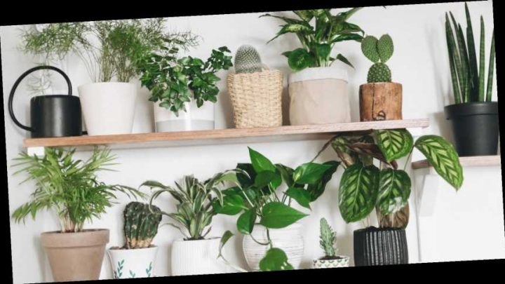 The ultimate guide to buying, owning and caring for houseplants