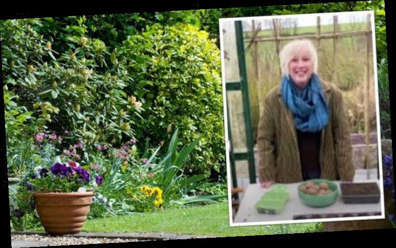 Carol Klein: How she transformed a field at her Glebe Cottage home into beautiful garden
