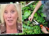 Carol Klein: Gardening expert on what 'does more harm than good' when weeding