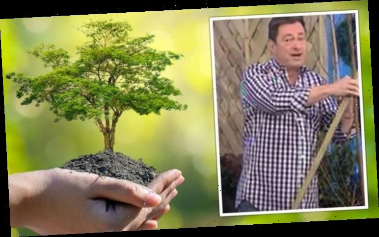 Alan Titchmarsh: Gardening expert shares tip using 'old pair of tights' to plant a tree