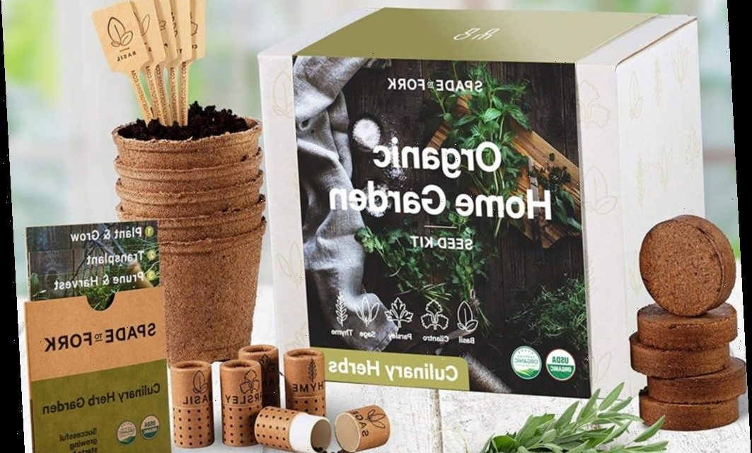 These Indoor Herb Kits Will Help You Add Some Life and Flavor to Your Kitchen
