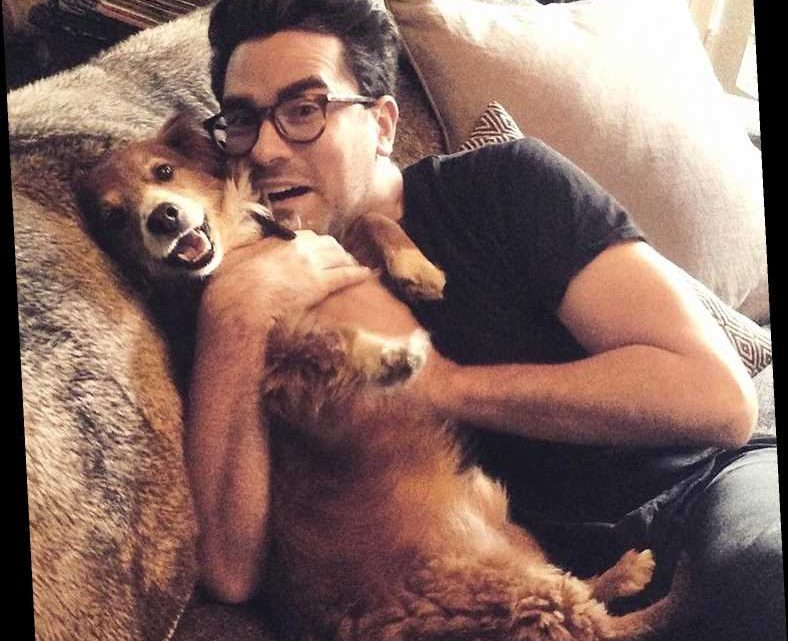 Celebrities Who Love Their Rescue Pets