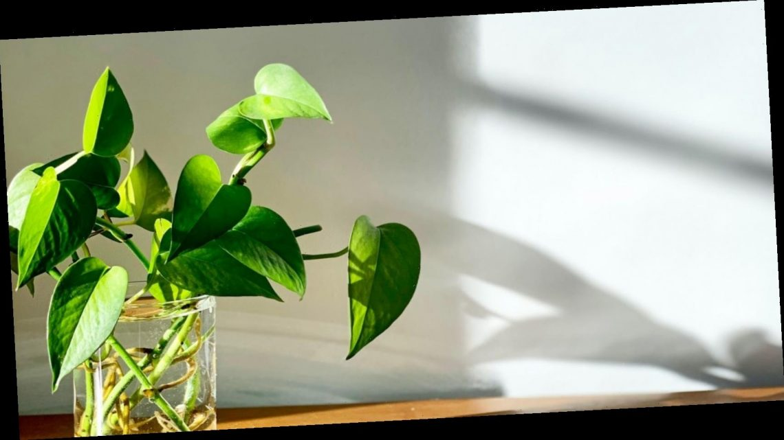 How to grow new plants from cuttings of your old ones