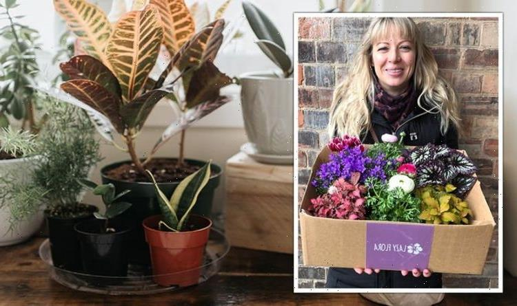 Gardening expert shares 'the trick' to caring for house plants for National Gardening Week