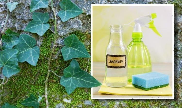 How to kill ivy naturally – 3 easy ways