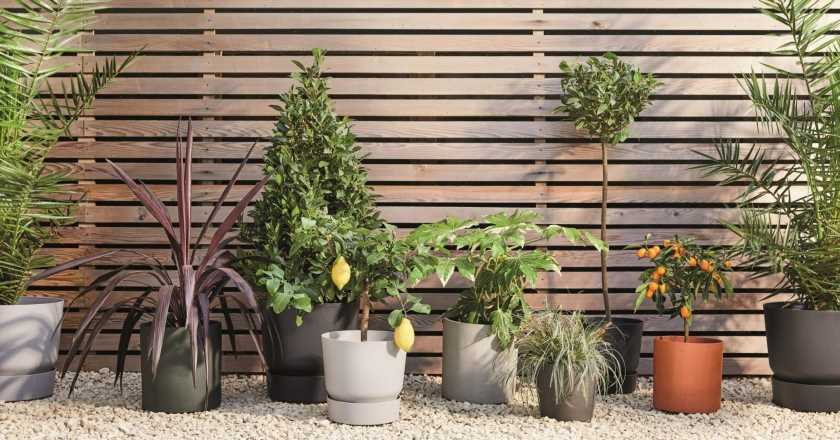 Patch's new plant collection is here to help you spruce up your outside space