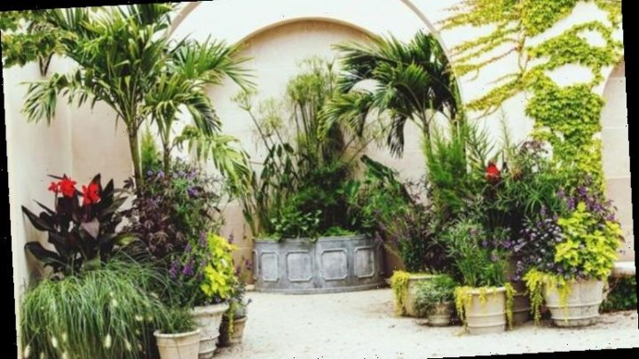 Gardening expert explains how to create a 'tropical haven' in your garden ahead of summer