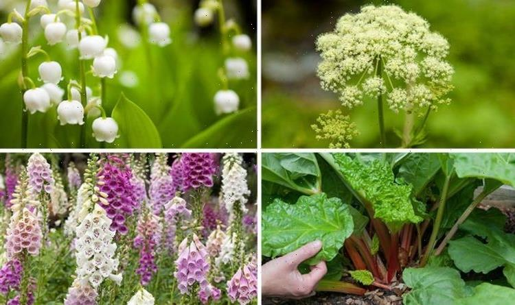 10 poisonous plants which you should be aware of