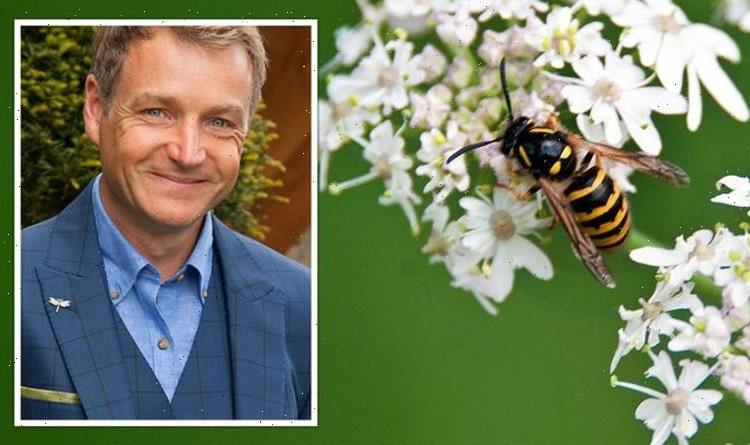 Gardening expert shares how wasps can help stop caterpillars 'devastating' your crops