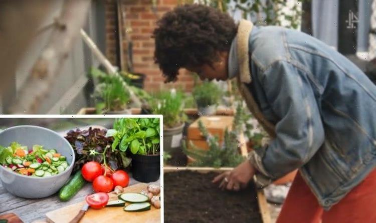 Great Garden Revolution: Grow 'easy' summer salad favourites that germinate in 10 days