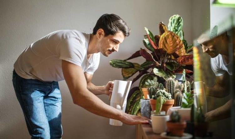 How to care for house plants – 6 steps to perfect plants