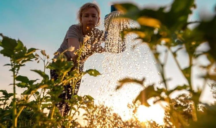 How to keep your garden hydrated – 10 hacks to keep your garden watered all year