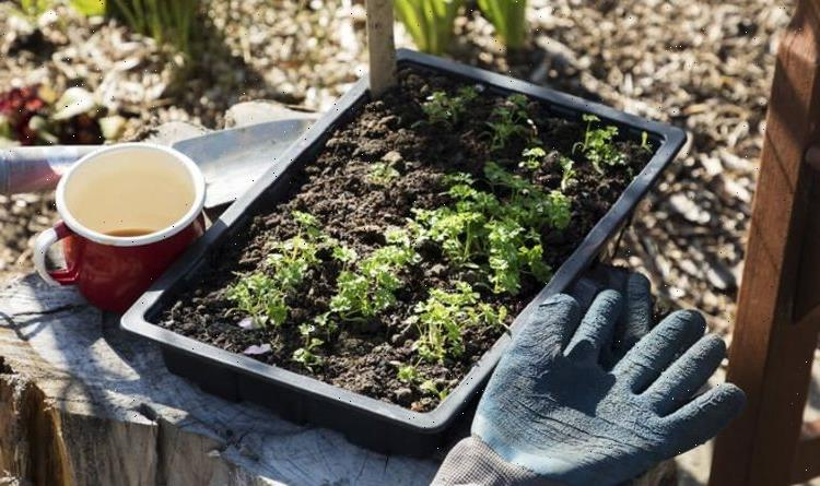 How to space your vegetables for planting