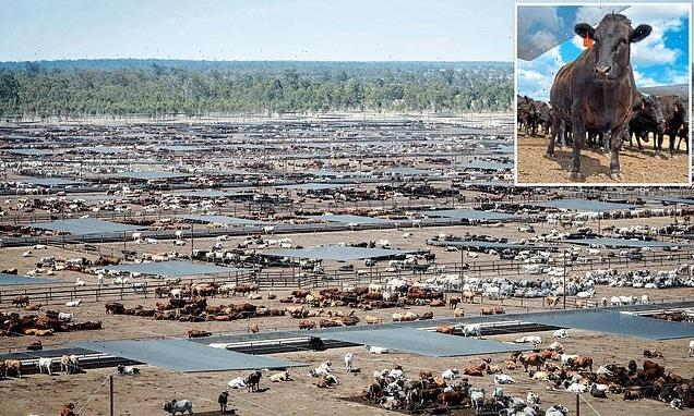 ISABEL OAKESHOTT: The idea of this Australian mega farm appals me