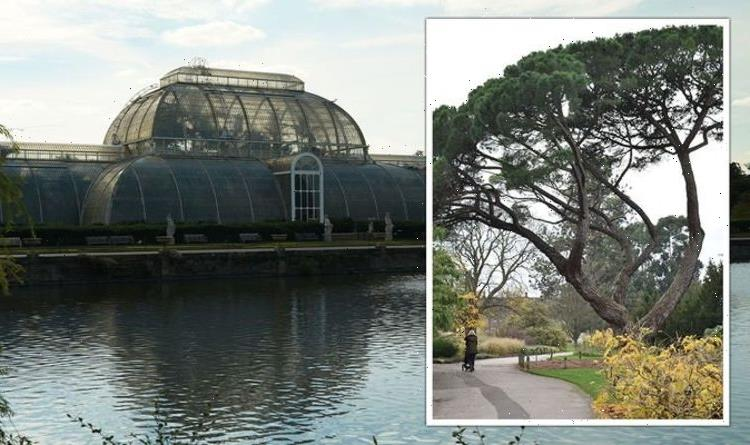 Kew Gardens expert shares their natural methods for controlling pests ahead of new show