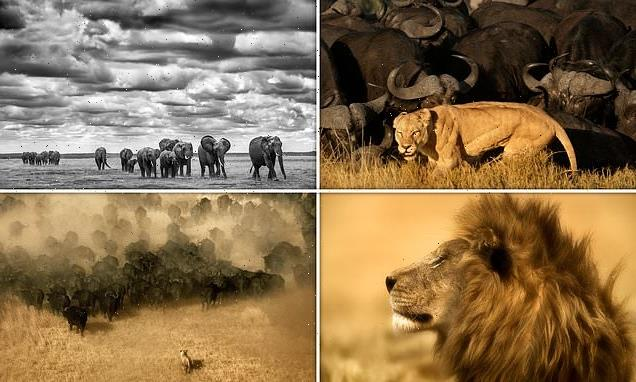Meet legendary wildlife photographers Beverly and Dereck Joubert