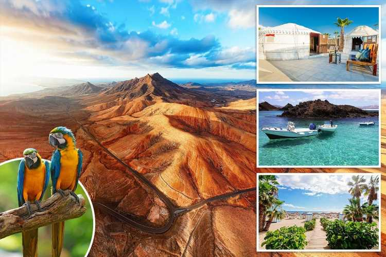 Tenerife, Fuerteventura or Lanzarote – which of the Canaries will you pick for a post-lockdown getaway?