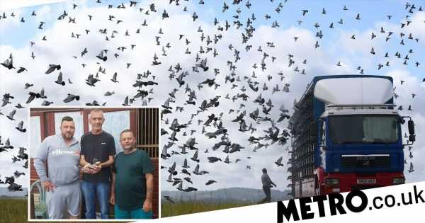 Thousands of pigeons vanish mid-race in 'Bermuda Triangle-style mystery'
