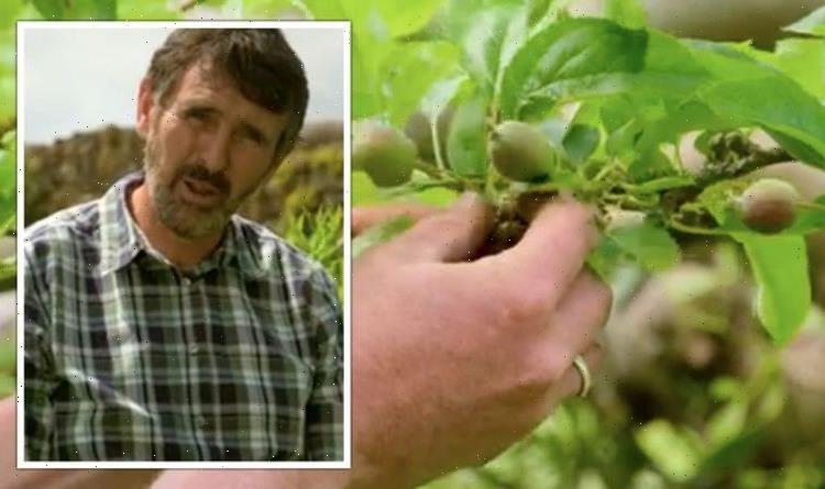 Gardeners' World: Adam Frost shares gardening 'jobs' to tackle now – 'worth the effort'