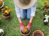 Gardening tips: FIVE ways to prevent knee pain while gardening