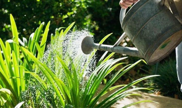 How often should you water your plants during a heatwave?