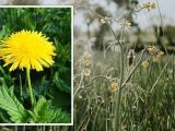 Plant expert shares why weeds are 'great' for your garden – 'why pull them up?'