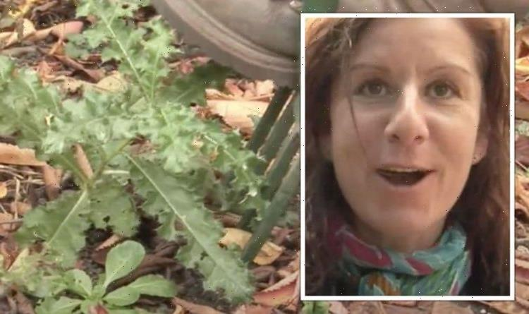 'Remove them entirely!' Gardening expert shares hacks for disposing of perennial weeds