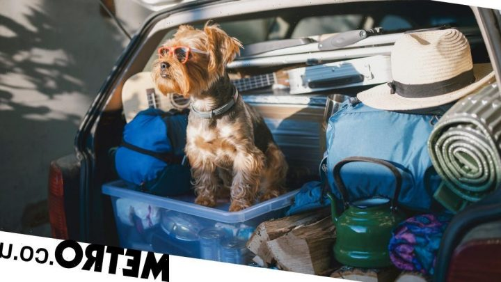 The best dog-friendly staycation for you based on your pup's breed