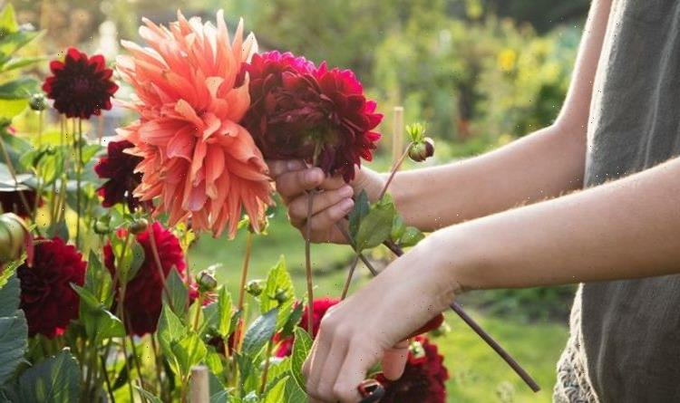 The five types of plants you should deadhead now to maintain a healthy garden