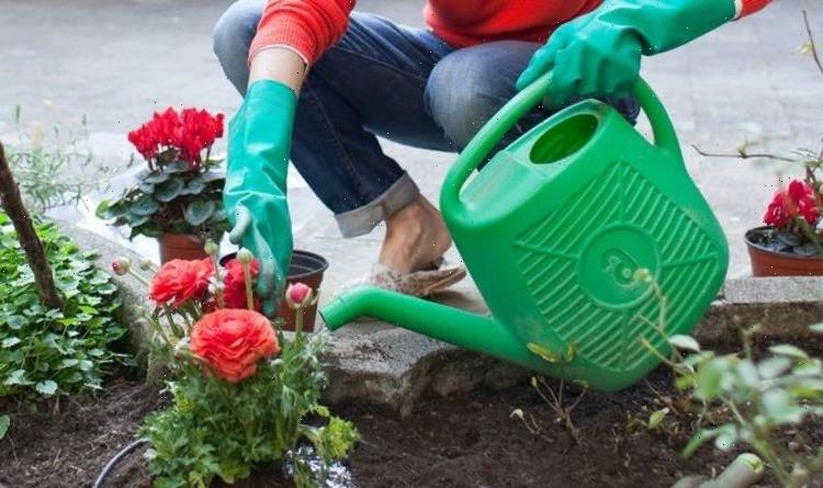 Watering plants: The watering mistake you might be making while looking after your garden
