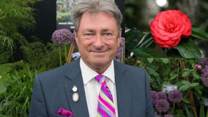 'They go yellow': Alan Titchmarsh issues warning when growing Camellias